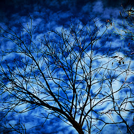 one tree in the sky by Magdalena Wysoczanska - Nature Up Close Gardens & Produce ( sky, nature, tree, blue, silhouette, nature up close )