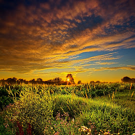 Think I Will Sit a Spell by Phil Koch - Landscapes Prairies, Meadows & Fields ( vertical, photograph, farmland, yellow, leaves, love, sky, nature, tree, autumn, orange, twilight, agriculture, horizon, portrait, dawn, environment, national geographic, serene, trees, floral, inspirational, natural light, wisconsin, phil koch, spring, sun, photography, farm, horizons, inspired, office, clouds, park, green, scenic, morning, farming, shadows, wild flowers, field, red, blue, sunset, fall, peace, meadow, summer, sunrise, earth, landscapes )