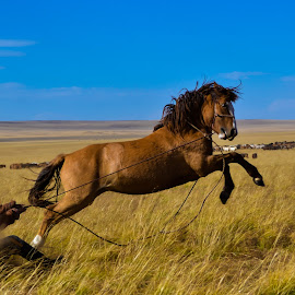 by Borjigon Bayasal - Animals Horses