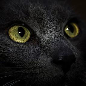 by Ciprian Nafornita - Animals - Cats Kittens (  )