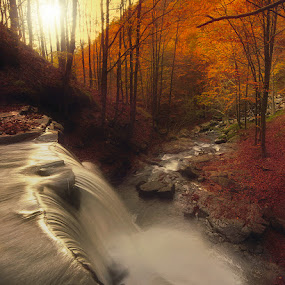 Golden Fall by Paolo Lazzarotti - Landscapes Waterscapes ( mountain, autumn, sunset, red leaves, foliage, red carpet, golden water, sunlight, water fall, appennines,  )