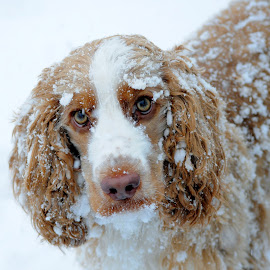 Fun in the Snow by Julie Granger - Animals - Dogs Portraits
