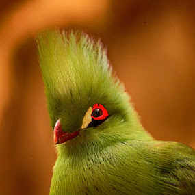 Green beauty by Radu Eftimie - Animals Birds ( bird green,  )
