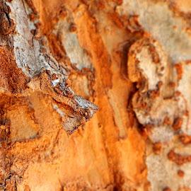 Bark, bark by Donna Probasco - Novices Only Macro (  )