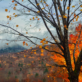 Fall by Tracey Doak - Novices Only Landscapes ( mountain, tree, fall, leaves, pretty, color, colorful, nature )