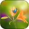 Flower Wallpaper for whatsapp 1.2 Apk