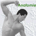Physiokompendium Anatomie icon