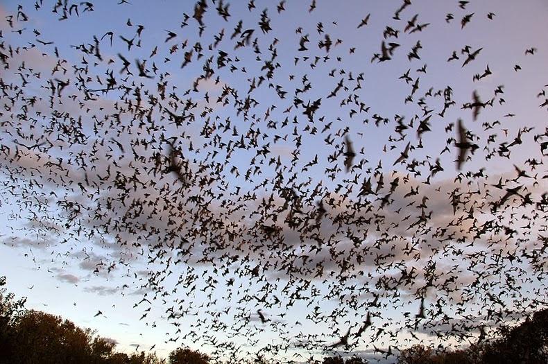 bracken-bat-cave-3