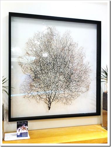 fan coral art