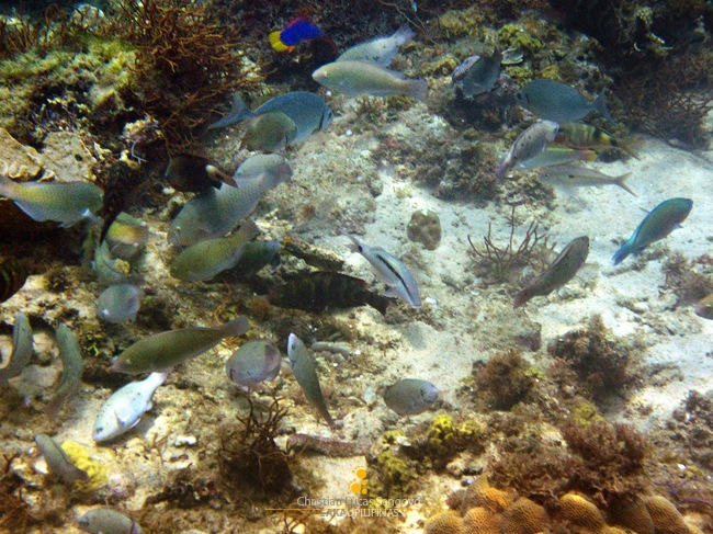 A Bunch of Fishes at Tabonan's Underwater