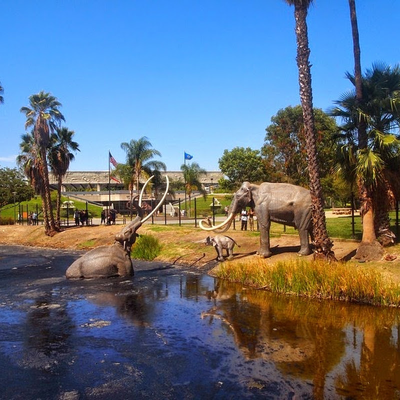 La Brea Tar Pits And The Fossils Within