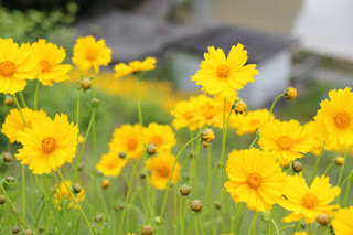 堤体に咲く花