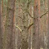 die Bäume sind hier lebendig ;)