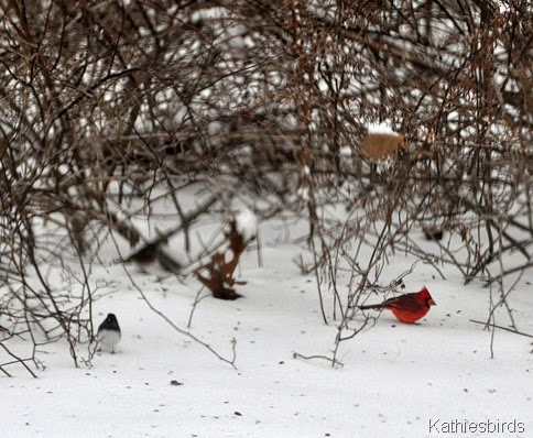 1. 1-4-2015 winter birds-kab