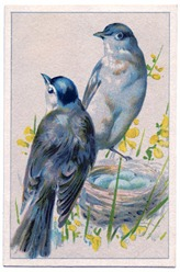 Birds-BlueEggs-vintageimage-Graphics-Fairy
