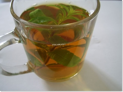 herbal tea in a cup