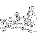 conejos.jpg