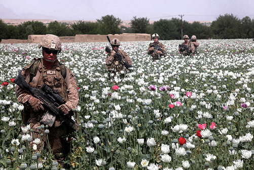 US troops guarding poppy fields