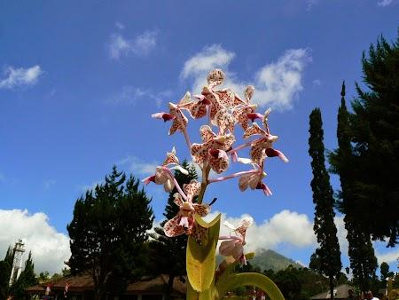 11. Orhidee.JPG
