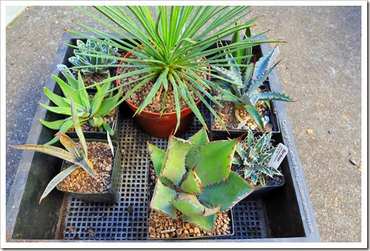 131211_plants_from_trip_021
