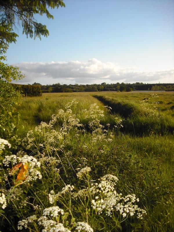 Summer Meadow-Drumsna Co.Leitrim-Michael O Rourke.JPG