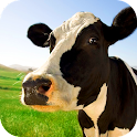 Cow Acrobat Live Wallpaper icon