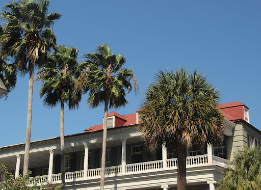 South Carolina Palm Trees