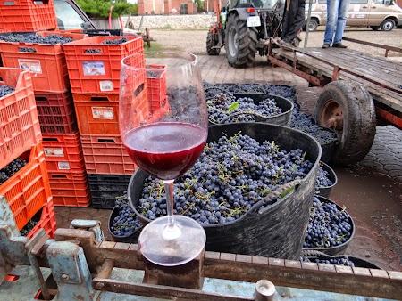 Basarabia - Drumul Vinului. Struguri sa fie folositi la vin