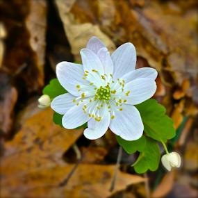 Wildflower by Jermaine Pollard - Instagram & Mobile Android ( instagram, pollen, green, outdoors, white, yellow, samsung, note, flower, galaxy,  )