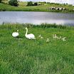 Biodiversity on Irish Farms-Marian Hennessy.JPG