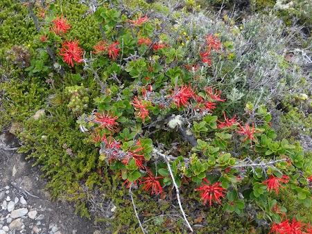 Tara de Foc: Flora Insula H