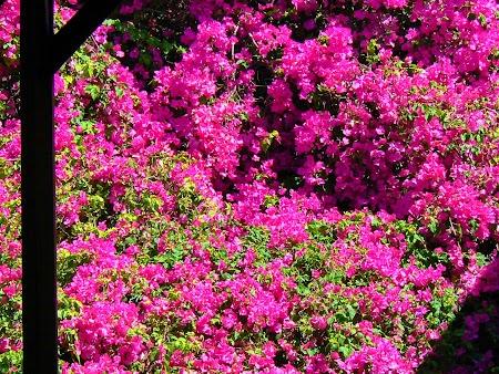 10. Flori rosii.JPG