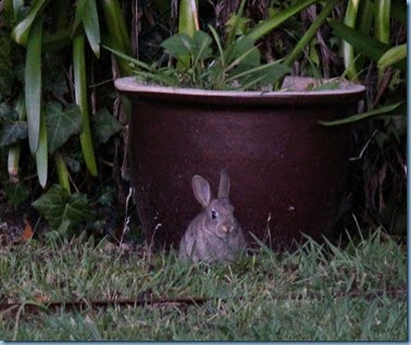 rabbit  #3, cropped