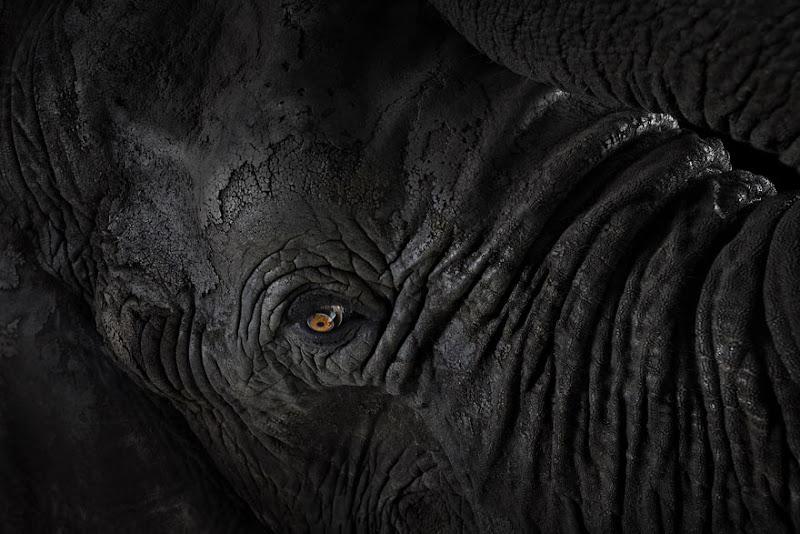 animal-photography-affinity-Brad-Wilson-elephant-4.jpeg