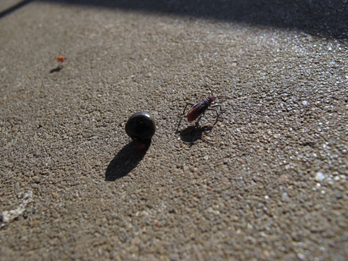 Seed  and bug shadows
