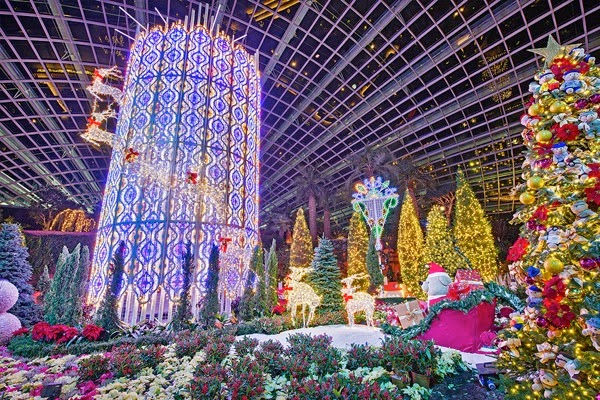Yuletide in the Flower Dome Night