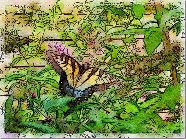 butterly1