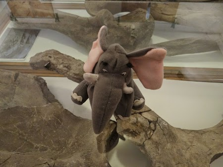 06. Elefantel la Baraolt.JPG