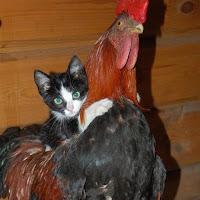 Animales, loros, aves, gatos, perros, fieras, osos, -26.jpg