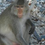 Тайланд 20.05.2012 12-40-53.jpg
