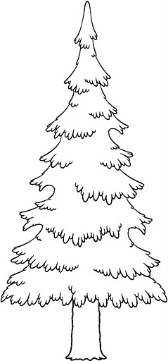 evergreen tree coloring pages - photo#6