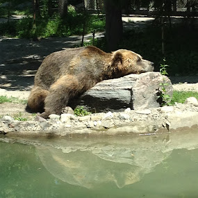 Sleepy Sunday by Jennifer Bacon - Instagram & Mobile iPhone ( reflection, resting, zoo, black bear )