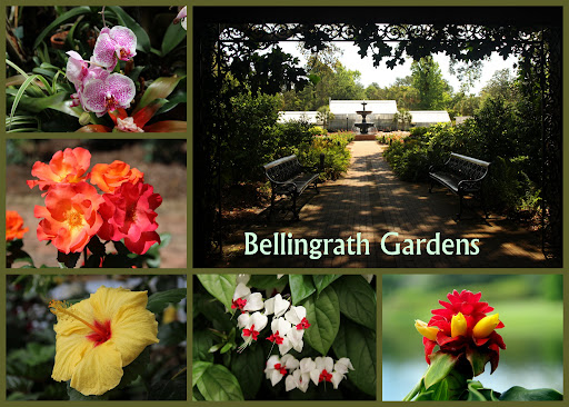 The flowers at Bellingrath Gardens.