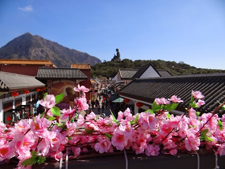 Flori pe Lantau