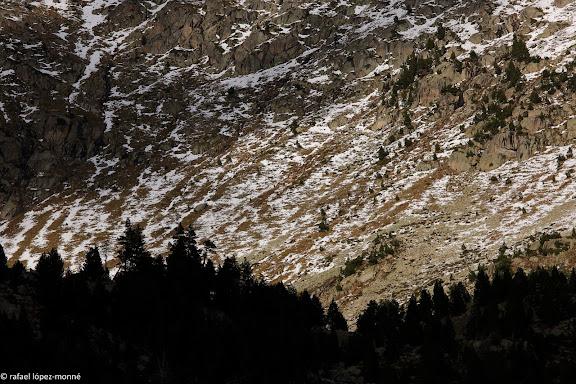 Circ de l'estany Redo.Parc Nacional d'Aigues Tortes i Estany de Sant Maurici.La Vall de Boi, Alta Ribagorca, Lleida