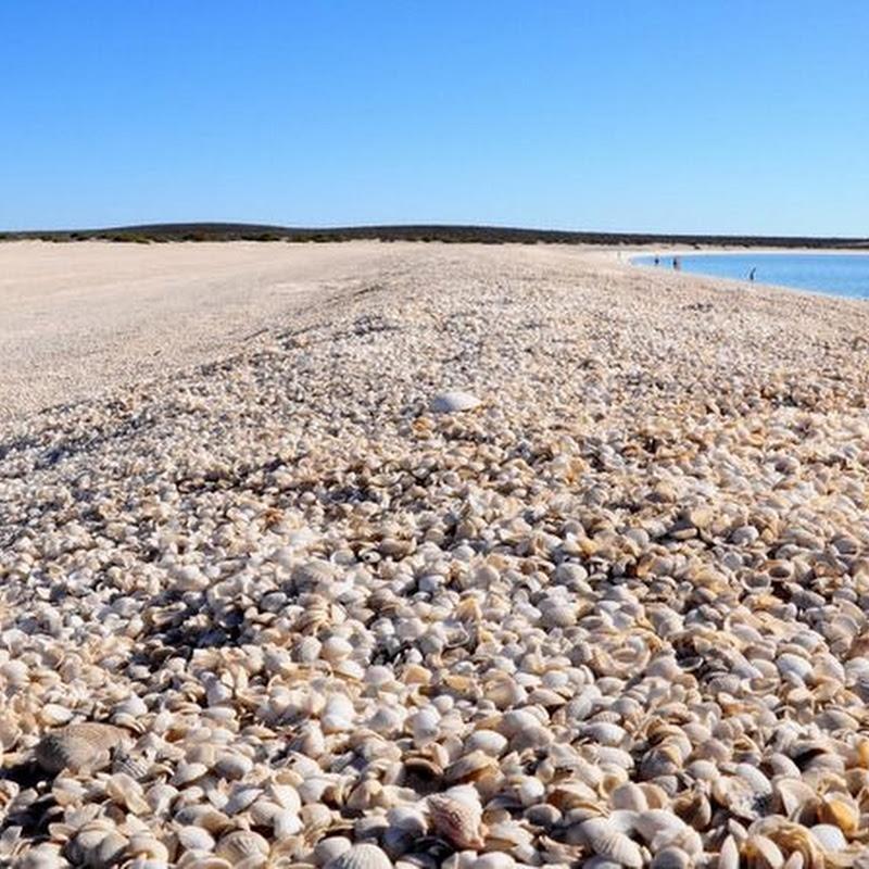 4 Amazing Shell Beaches Around The World