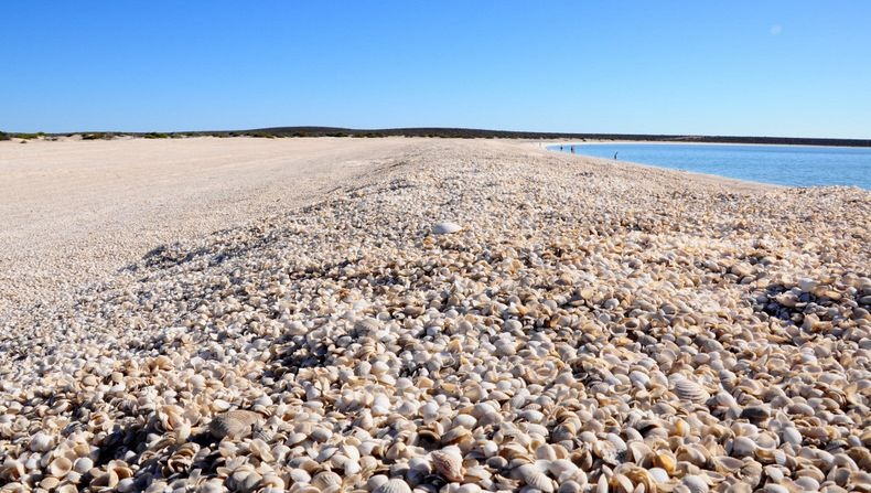 Shell Beach Australia 1