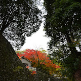 紅葉もきれいだった
