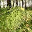 Богатство лесов и озёр (П.Максач)