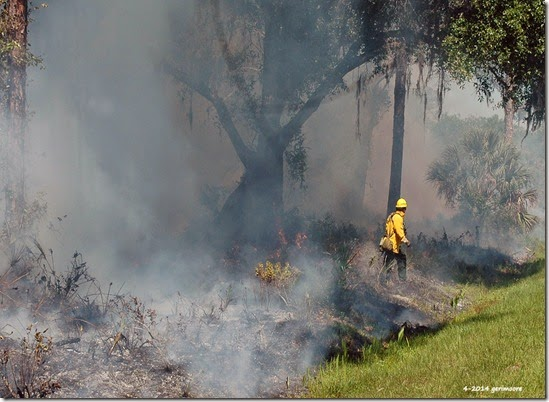 Myakka River SP fire 005